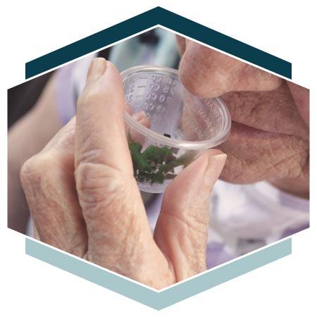 Alzheimer's resident smelling fresh herbs